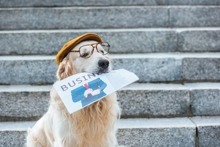 Photo pour retriever dog in cap and eyeglasses holding business newspaper - image libre de droit