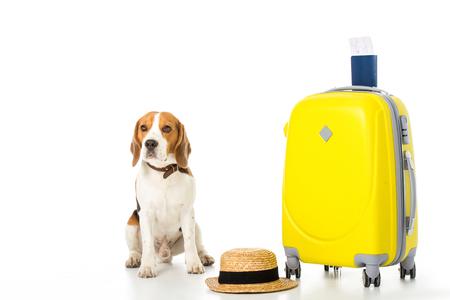 Foto de beagle dog with suitcase, passport, ticket and straw hat isolated on white - Imagen libre de derechos