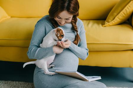 Foto de attractive pregnant woman palming jack russell terrier in living room - Imagen libre de derechos