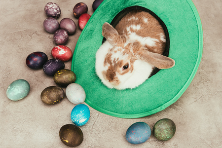 Photo for High angle view of domestic rabbit lying in green hat with Easter eggs on surface - Royalty Free Image