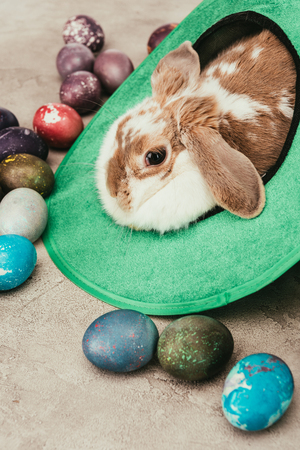 Photo for Domestic rabbit lying in green hat with Easter eggs on surface - Royalty Free Image