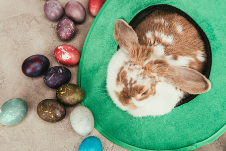 Photo for High angle view of domestic rabbit in green hat with Easter eggs on surface - Royalty Free Image
