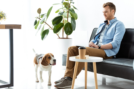 Foto de male freelancer working on laptop while beagle running near table with paper coffee cup at home office - Imagen libre de derechos