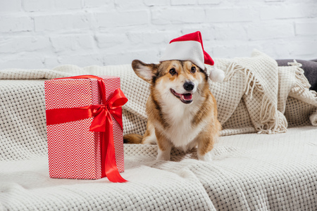 Foto de pembroke welsh corgi in santa hat with christmas present on sofa - Imagen libre de derechos