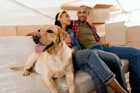 Foto de african american couple with labrador dog resting on sofa - Imagen libre de derechos