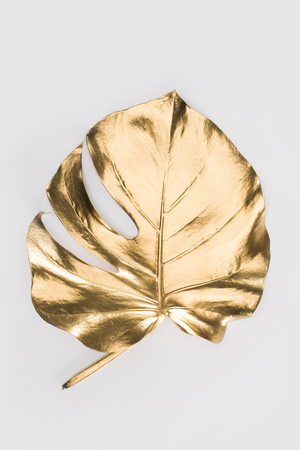 Foto de close up view of shiny big golden leaf isolated on grey - Imagen libre de derechos