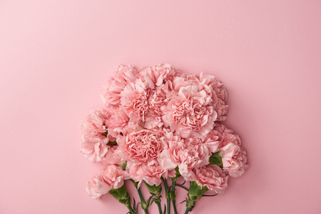Foto de beautiful pink carnation flowers isolated on pink background - Imagen libre de derechos