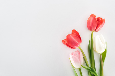 Foto de top view of red, pink and white tulip flowers isolated on grey - Imagen libre de derechos