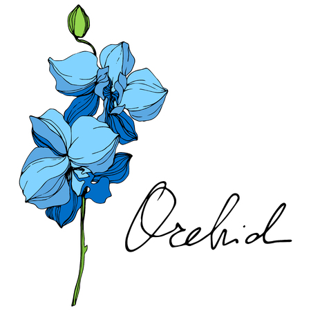 Illustration pour Vector. Blue orchid. Floral botanical flower. Wild spring leaf wildflower isolated. Blue and green engraved ink art. Isolated orchid illustration element on white background. - image libre de droit