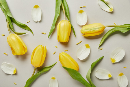 Foto de top view of petals and yellow tulips isolated on white - Imagen libre de derechos
