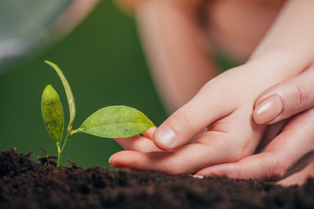 Foto de selective focus of woman and kid hands near young green plant growing in ground on blurred background, earth day concept - Imagen libre de derechos