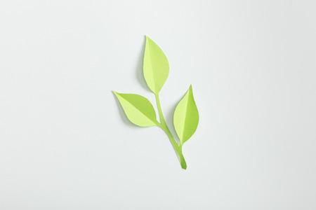 Photo pour top view of green paper plant on grey background - image libre de droit