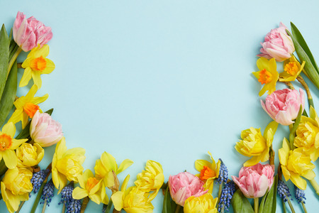 Photo for top view of pink tulips, yellow daffodils, blue hyacinths on blue background with copy space - Royalty Free Image