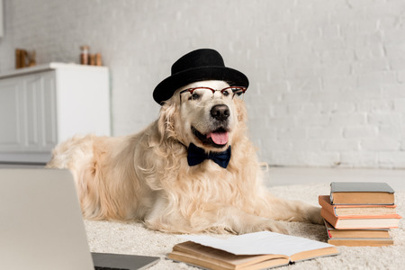 Foto de cute golden retriever in bow tie, glasses and hat lying on floor with laptop and books - Imagen libre de derechos