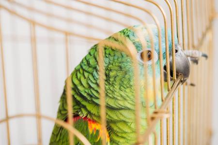 Photo pour selective focus of bright amazon parrot sitting in bird cage - image libre de droit