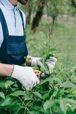 Partial view of gardener in overalls and gloves trimming bush with pruner in garden