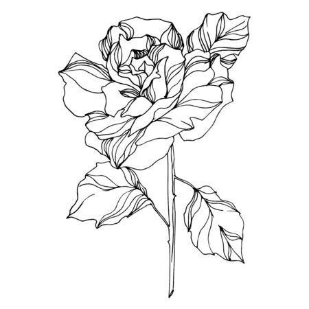 Illustration pour Vector Roses floral botanical flowers. Wild spring leaf wildflower isolated. Black and white engraved ink art. Isolated rose illustration element on white background. - image libre de droit