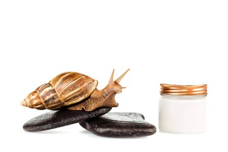 brown snail on spa stones near cosmetic cream container isolated on white