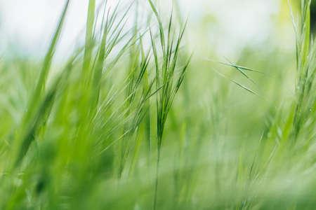 Photo pour close up of green and fresh grass - image libre de droit