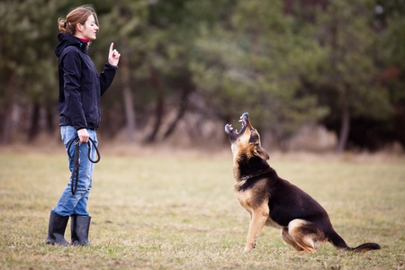 Master and her obedient (German shepherd) dog