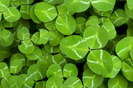 Vibrant Green Clover Patch background for St. Patricks Day