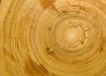 Wood Ring Texture Mural Wallpaper