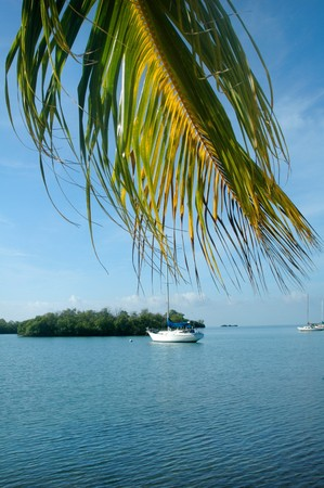 Sailboat on carribean water with palm frond blowing in the wind