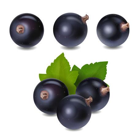 Illustration pour Blackcurrant berry realistic icon 3d vector illustration. - image libre de droit