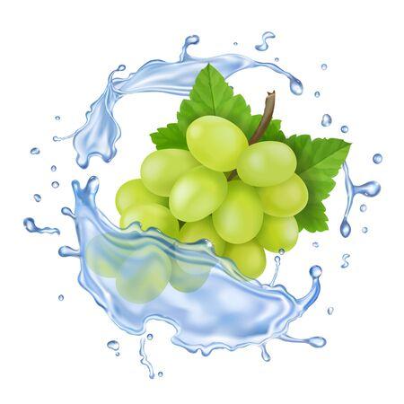 Illustration pour White grape in water splash. Realistic grape branch vector icon - image libre de droit