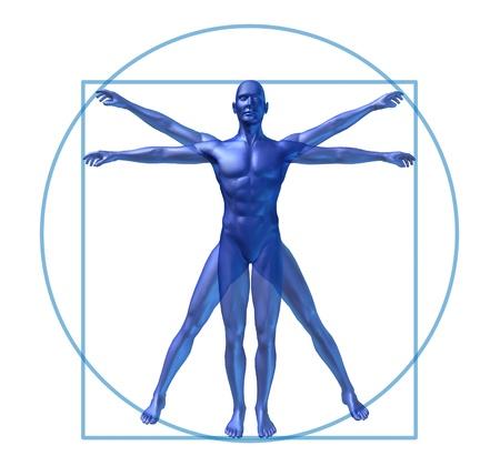 human diagram vitruvian classic man