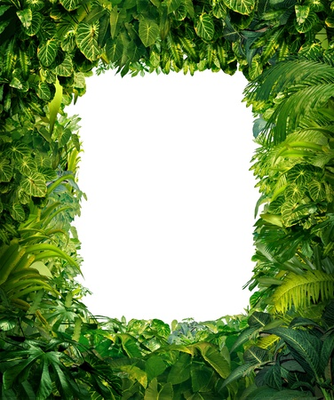 Jungle border blank frame with rich tropical green plants as ferns and palm tree leaves found in southern hot climates as south America Hawaii and Asia with framed white isolated copy space center