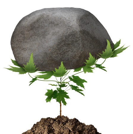Powerful growth and unstoppable success as a small green tree sapling conquering adversity by emerging from the earth and lifting a huge rock obstacle that is in its path on a white background