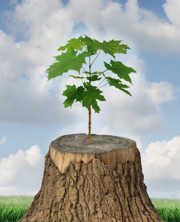New development and renewal as a business concept of emerging leadership success with an old cut down tree and a new strong seedling growing from the center trunk as a concept of support and building a future