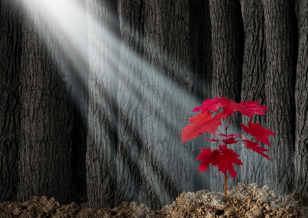 Great potential business metaphor with an old dark forest of tall trees and a young red leaf sapling emerging out of the ground as a symbol of future growth and hope for the future as an icon of investment growth and conservation of nature