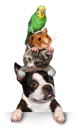 Group of pets concept as a dog cat hamster and budgie standing on top of eath other as a symol for veterinary care and support or pet store design element for advertising and marketing on a white background.