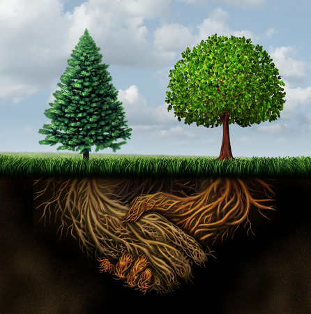 Global agreement shaking hands concept as two different trees from diverse regions showing underground roots coming together in a handshake as a symbol for international cooperation and making a deal.