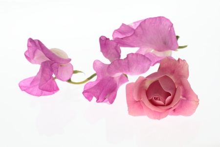 Flower arrangement of a rose and the sweet pea