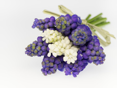 Bouquet of the grape hyacinth