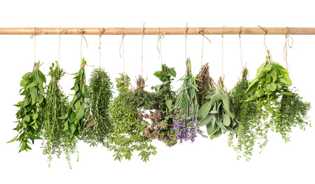 varios fresh herbs hanging isolated on white background  basil; rosemary; sage; thyme; mint; oregano, marjoram; savory; lavender