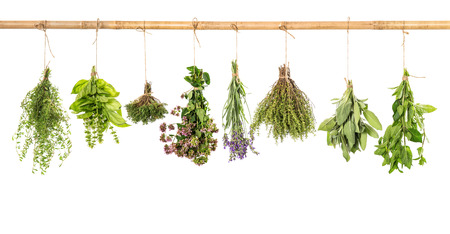 varios fresh herbs hanging isolated on white background  bundle of basil, sage, thyme, mint, marjoram, lavender