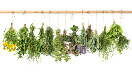 fresh herbs hanging isolated on white . basil, rosemary, sage, thyme, mint, oregano, marjoram, savory, lavender, dandelion