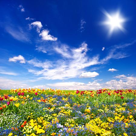 Photo pour beautiful flowers meadow and cloudy blue sky. nature landscape - image libre de droit