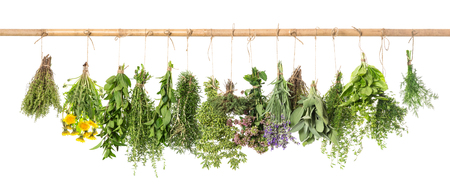 Photo for Fresh herbs hanging isolated on white background. Basil, rosemary, sage, thyme, mint, oregano, dill, marjoram, savory, lavender, dandelion - Royalty Free Image