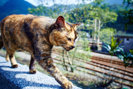 Tabby cat walking on the wall