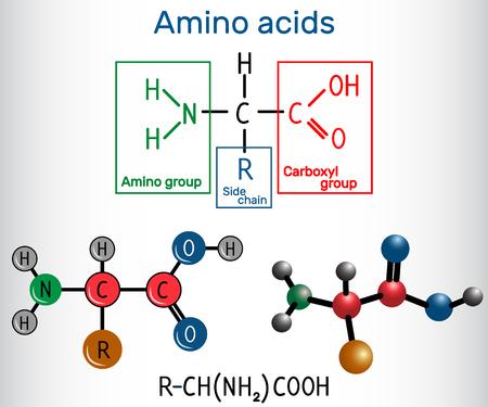 Ilustración de General formula of amino acids, which are building blocks of proteins and muscle fibers. Structural chemical formula and molecule model. Vector illustration   - Imagen libre de derechos