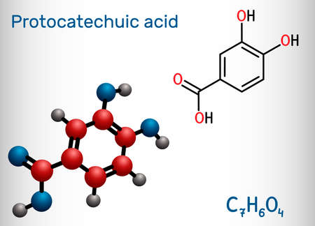 Illustration pour Protocatechuic acid, PCA molecule. It is 3,4-dihydroxybenzoic, phenolic acid, metabolite of antioxidant polyphenols, catechol, is found in green tea. Structural chemical formula, model. - image libre de droit