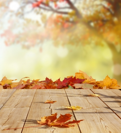 autumn backgroundの写真素材