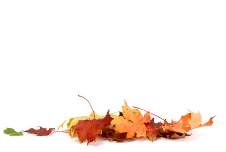 Photo for  Autumn Leave - Royalty Free Image