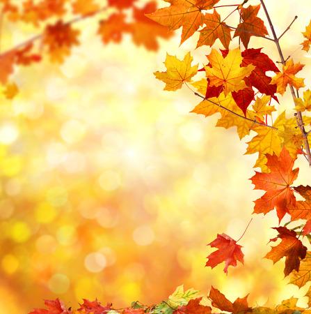 autumn leavesの素材 [FY31031400853]