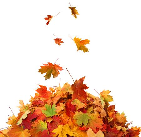 Photo pour Pile of Fall Leaves - image libre de droit